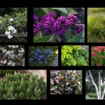 Rich plantings, welcoming customers to a place of business