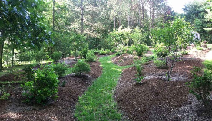 The Discovery Garden, one year after installation, a place to play and explore