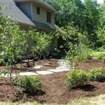 First year after installing the amelanchier shade garden, no shade yet...
