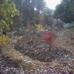The berms planted, showing Fall color
